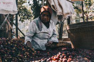 petani kopi tempur